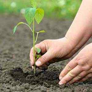 Need for great number of plantation globally