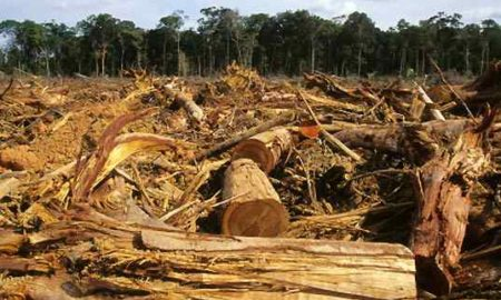 deforestation negative effects