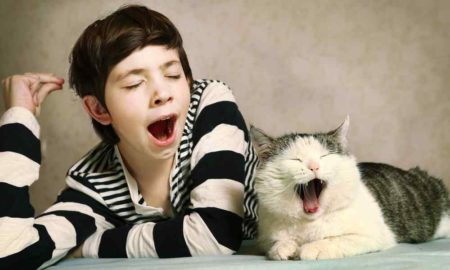 why are yawns contagious