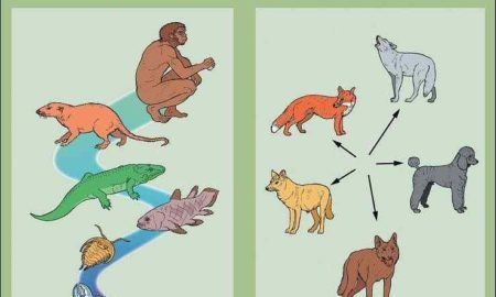 difference-between-microevolution-and-macroevolution